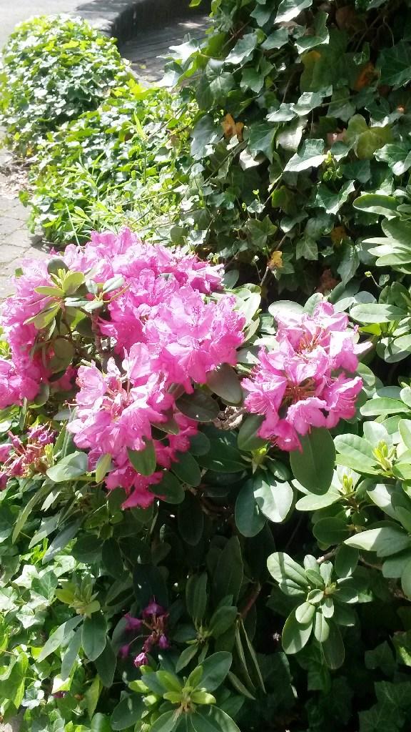 Anger Blumen